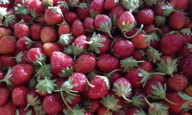 sorbete fresas heladeria los alpes