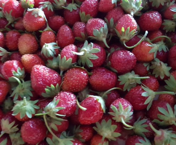 Sorbete de fresa ecológica